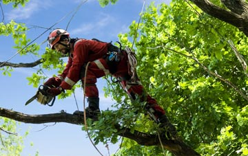 find trusted rated Stirling tree surgeons