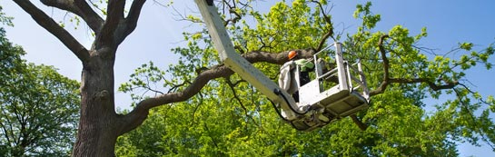 Stirling tree surgery services