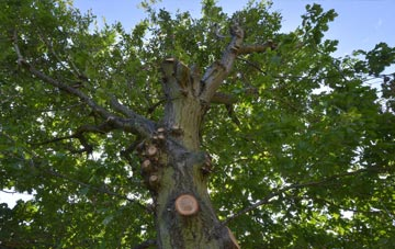 what is Stirling tree surgery?